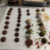 Chocolate course truffles